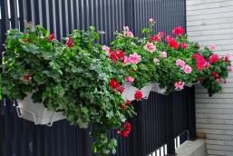 Flores 2009 10