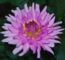 Flores 2009 4