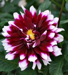 Flores 2009 5