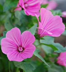 Flores 2009 7