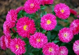 Flores 2009 8