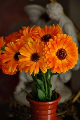 Flores 2009 9