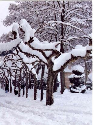 Tormenta nieve D