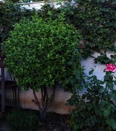 Huesos jardín D