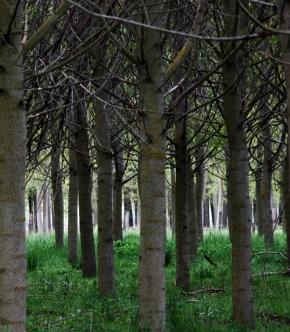 Niña bosque D