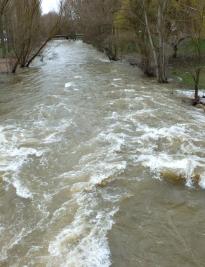Hollister río D